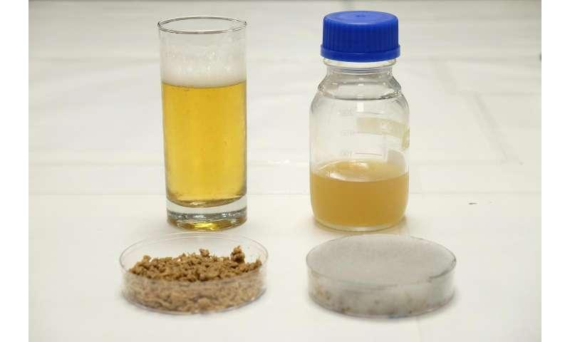 NTU scientists use brewery waste to grow yeast needed for beer making