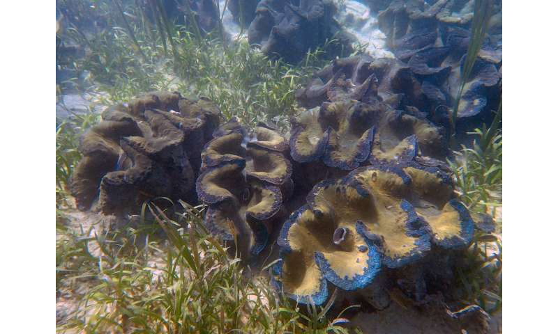 NUS marine scientists lead comprehensive review of giant clams species worldwide