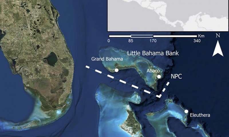 Ocean channel in Bahamas marks genetic divide in Brazilian free-tailed bats