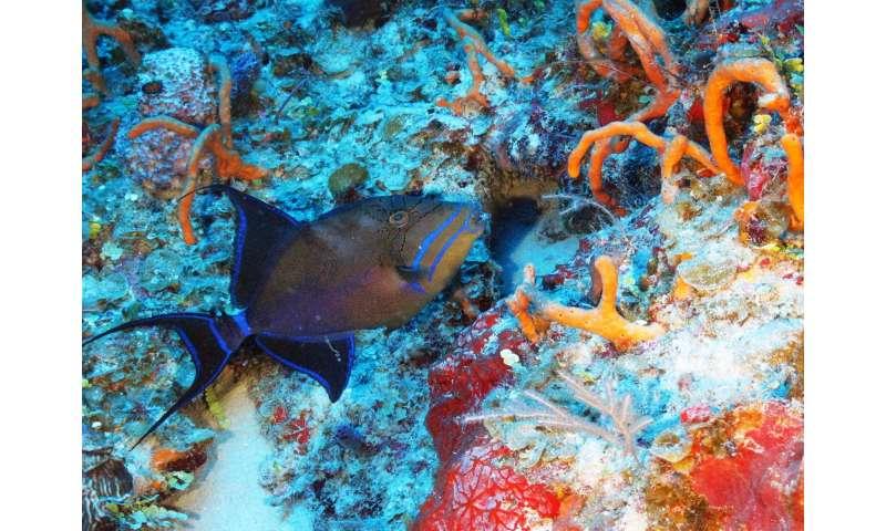Ocean exploration uncovers one of Cuba's hidden natural treasures