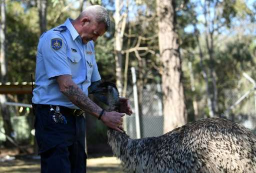 Officer Ian Mitchell handles an emu inside an enclosure at John Morony Correctional Complex Wildlife Centre outside Sydney.