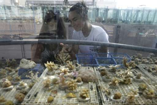 """Often mistaken for a form of vegetation, corals """"are in fact an animal that lives in symbiosis with an algae, a plant,&quot"""