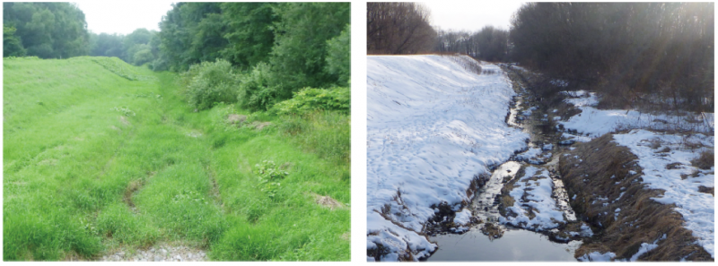 Once-dried tiny tributary serves as shelter for wintering fish