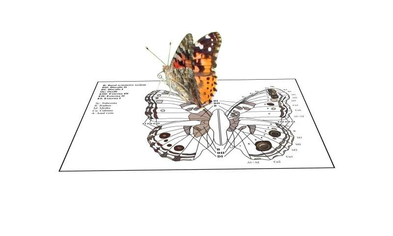 On the wings of lepidoptera
