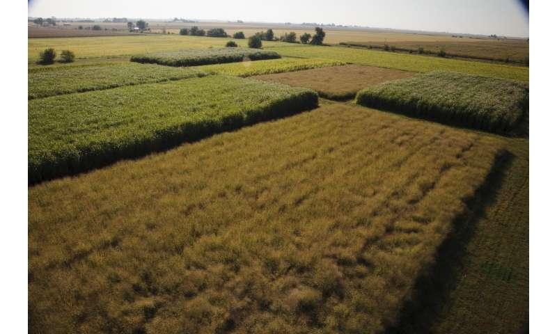 Open-source plant database confirms top US bioenergy crop