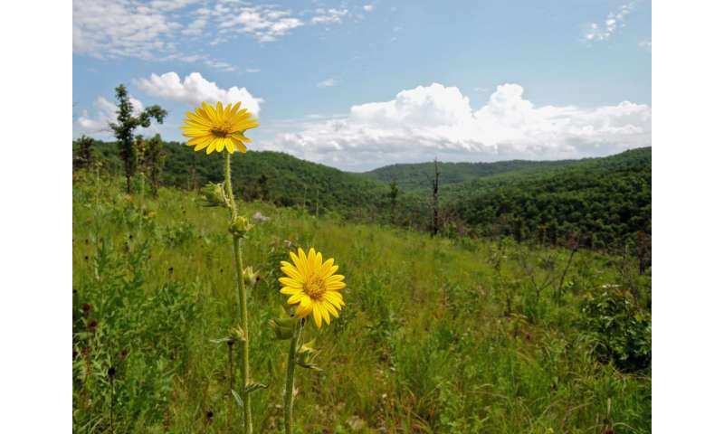 Ozark grasslands experience major increase in trees and shrubs