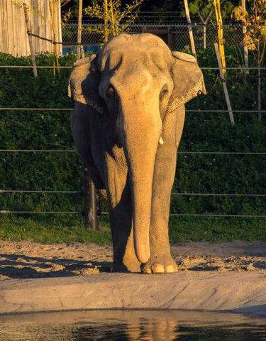 Packy, Oregon's beloved elephant, dies at 54