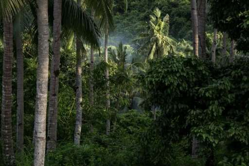 Palawan is often called the Philippines' last ecological frontier, as it is home to most of the nation's remaining forests