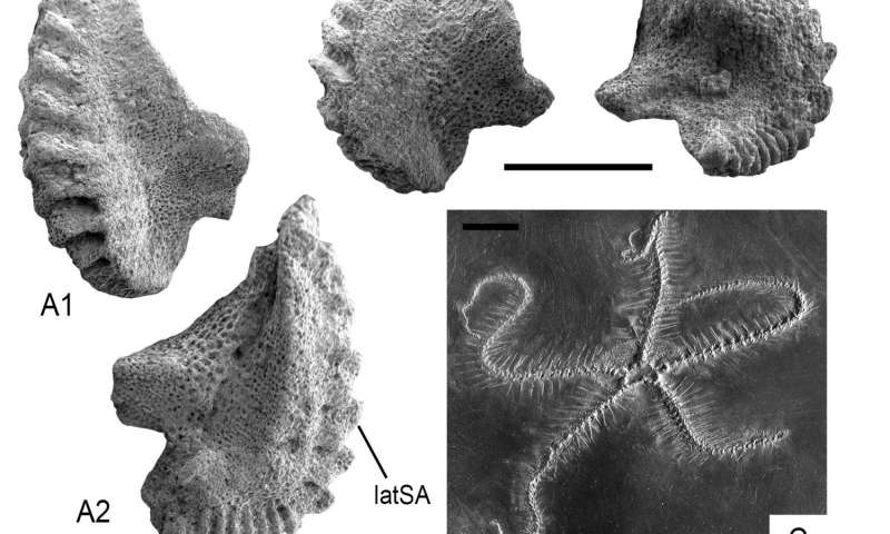 Paleozoic echinoderm hangover: Waking up in the Triassic