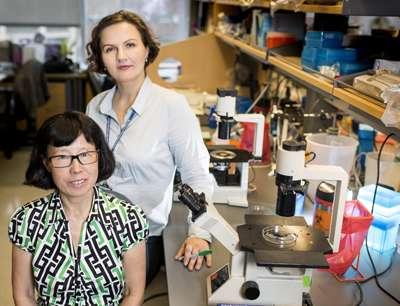 Pancreatic islets study may spur diabetes treatment advances