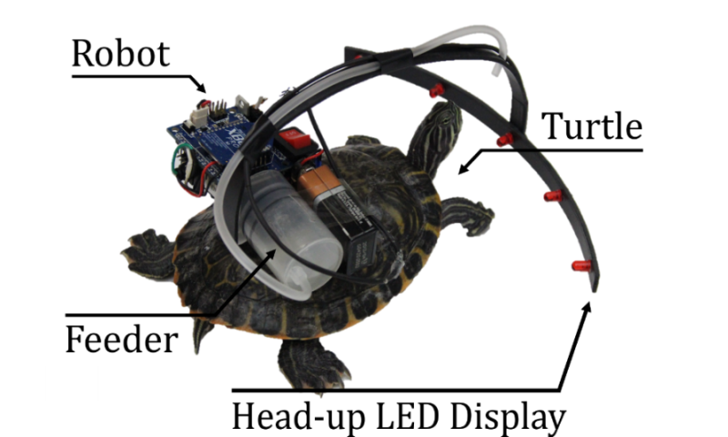 Parasitic robot system for waypoint navigation of turtle