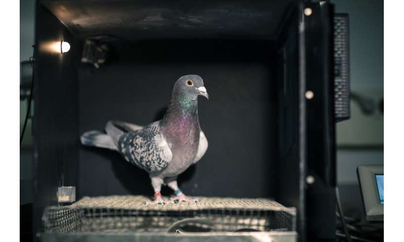 Pigeons can discriminate both space and time