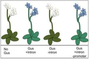 Plant genes may lack off switch, but have volume control