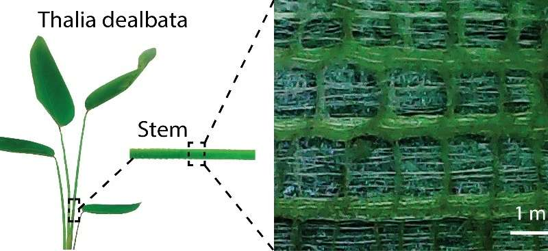 Plant inspiration could lead to flexible electronics