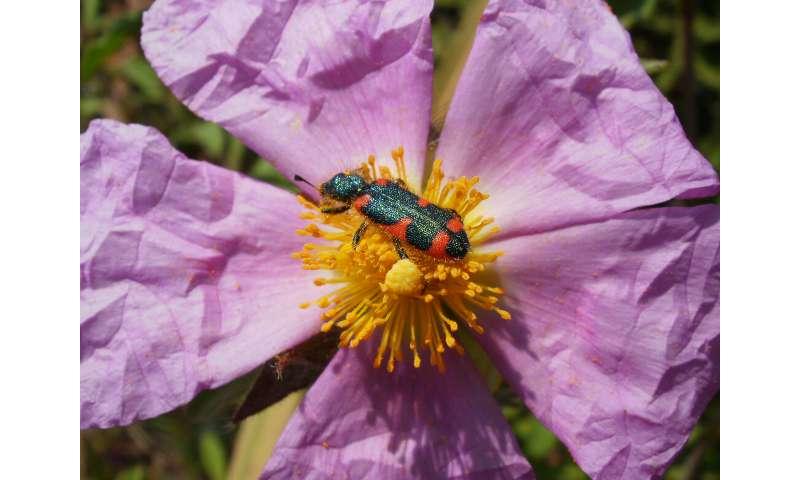 Plants combine color and fragrance to procure pollinators
