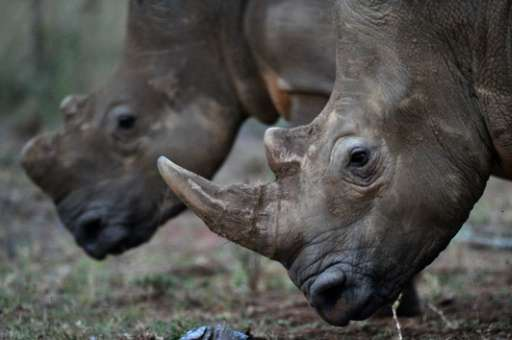 Poachers have killed more than 7,100 rhinos across Africa over the past decade