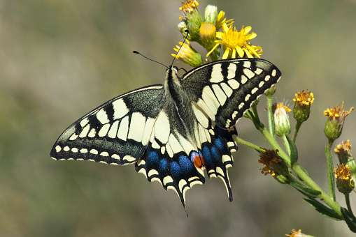 Pollinator extinctions alter structure of ecological networks