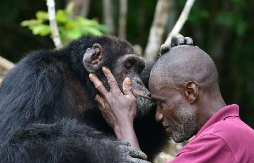"Ponso's dedicated carer Germain Djenemaya Koidja says the ape is ""like my child"""