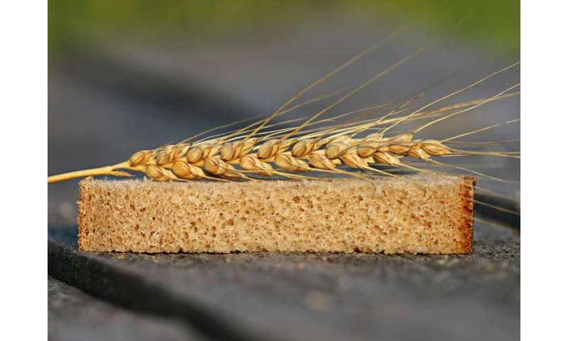 Producing a better wheat crop to feed the world—single to multiple wheat genomics