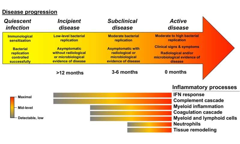 Progression from infection to pulmonary tuberculosis follows distinct timeline