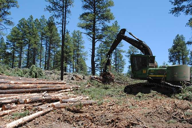 Proposed Forest Thinning Will Sabotage Natural Forest Climate Adaptation and Resistance to Drought, Fire, and Insect Outbreaks