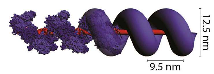 Protein 'rebar' could help make error-free nanostructures