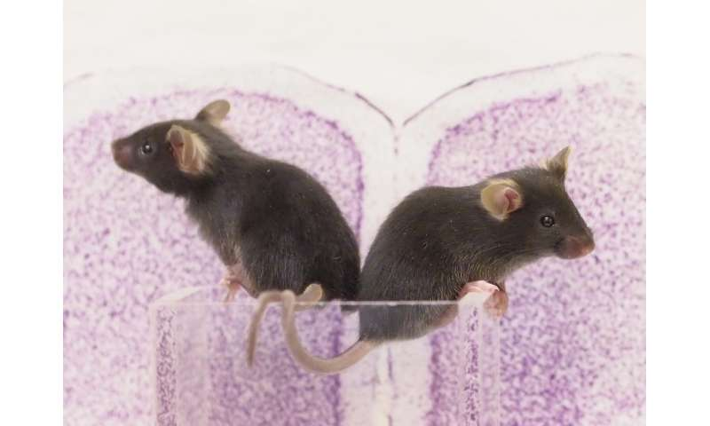Puberty hormones trigger changes in youthful learning