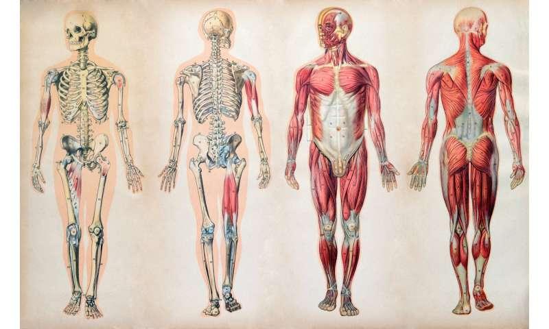 Public's poor knowledge of anatomy may hamper healthcare