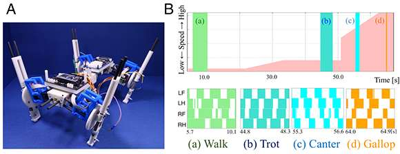 Quadruped robot exhibits spontaneous changes in step with speed