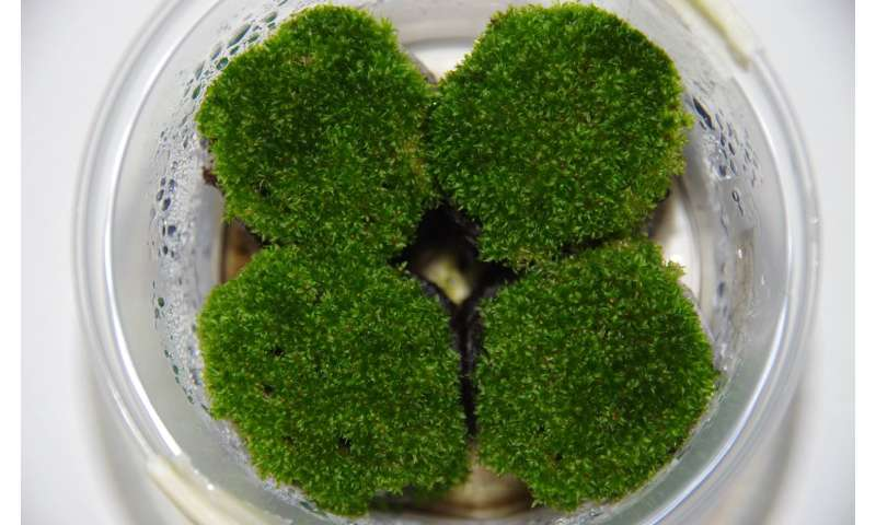 Receptors for neuron communication in humans vital for reproduction in mosses