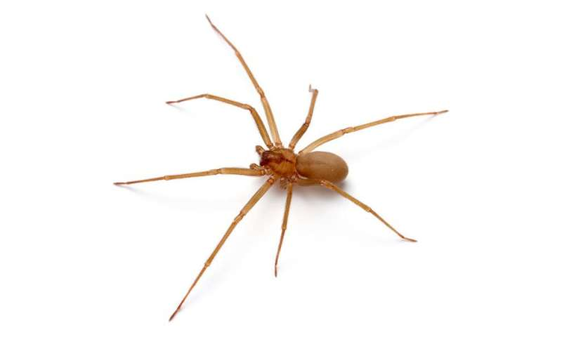 Recluse or not? Scientists use twitter to tackle spider questions