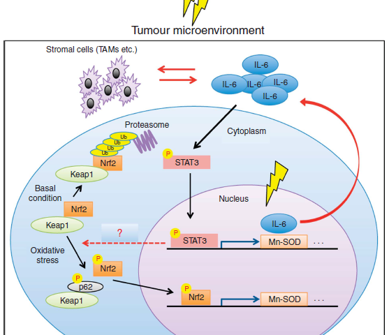 Reducing the radioresistance of cancer