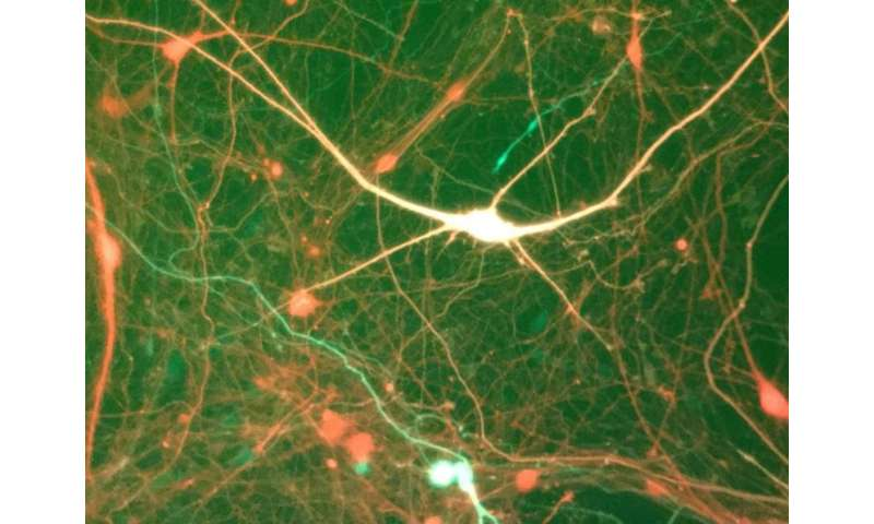 Regulating sodium channels in epilepsy