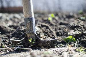 Report outlines how climate change will affect gardeners