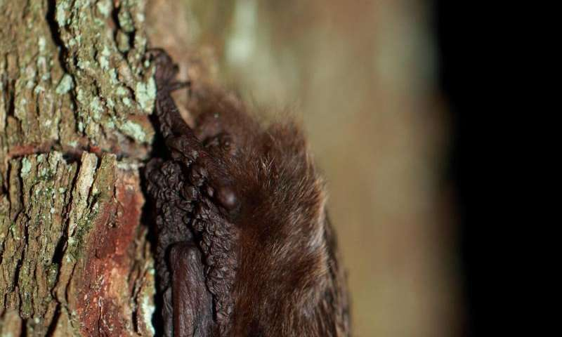 Research examines how insect outbreaks affect forests and bats