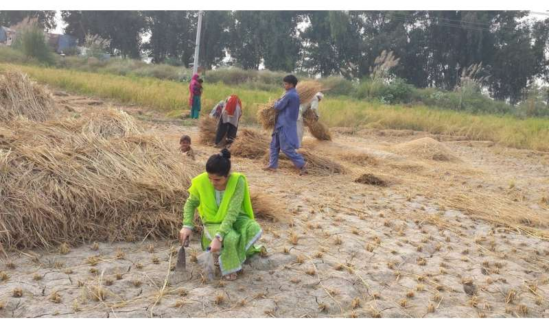 Residents of major Pakistan city are exposed to harmful pesticides