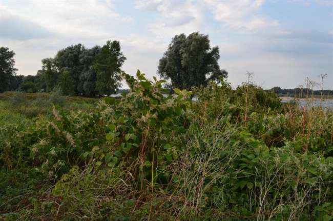 River areas overrun by invasive plants