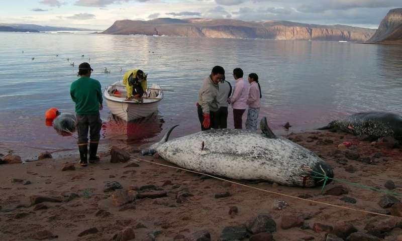 Rocket debris is a risk to Inuit food security