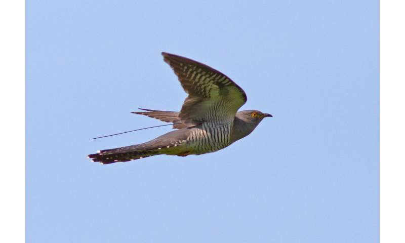 Routes of migratory birds follow today's peaks in resources