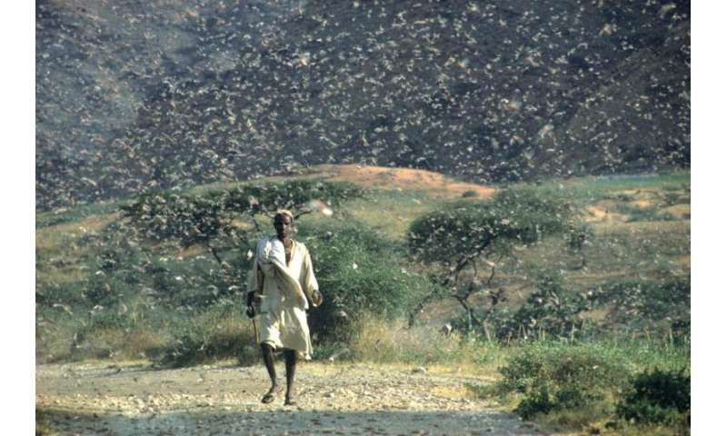 Satellites forewarn of locust plagues