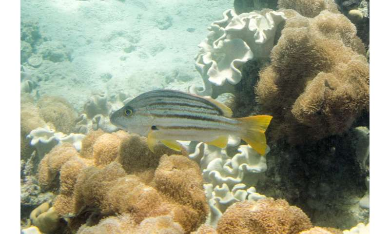 Scaling up marine conservation targets should benefit millions of people