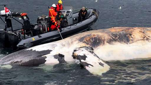 Scientists alarmed by 6 right whales deaths in Canada