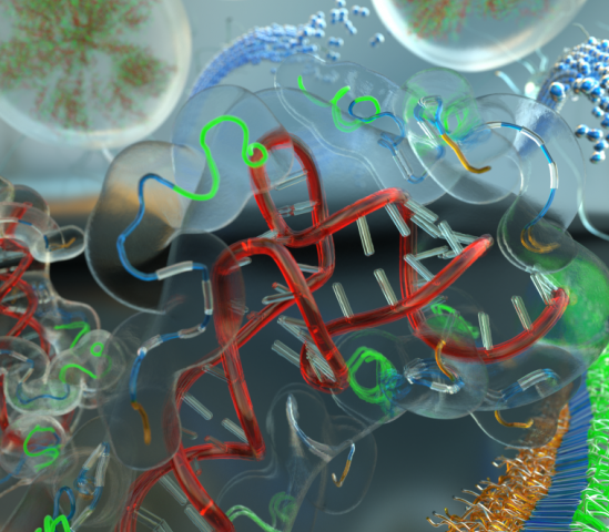 Scientists begin to unravel how the protein tau transitions from a soluble liquid state to solid fibrous tangles