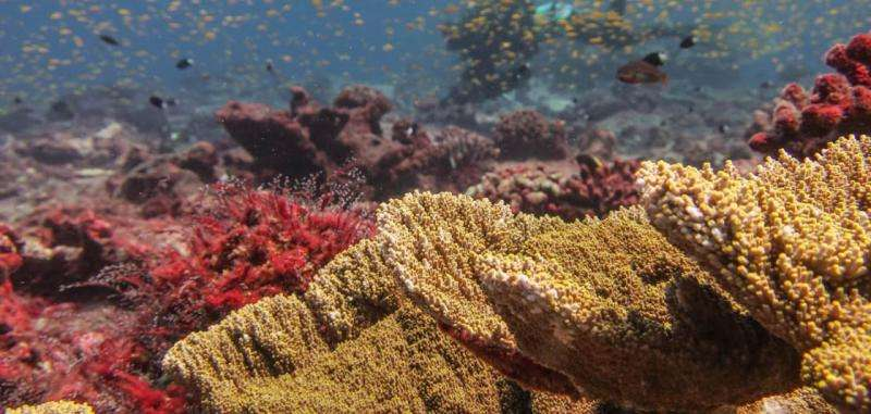 Scientists document coral loss and slow signs of recovery in the Central PacificApril 21, 2017