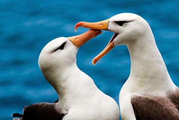 Seabirds foraging habits revealed