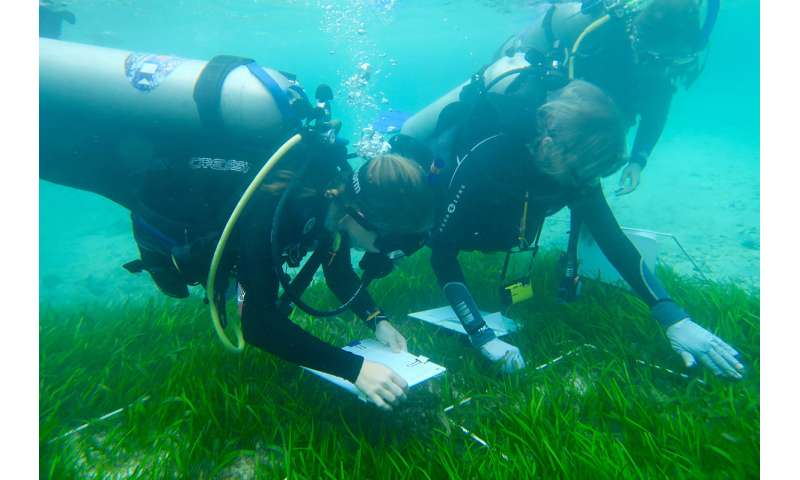 Seagrass biodiversity is both a goal and a means for restoration