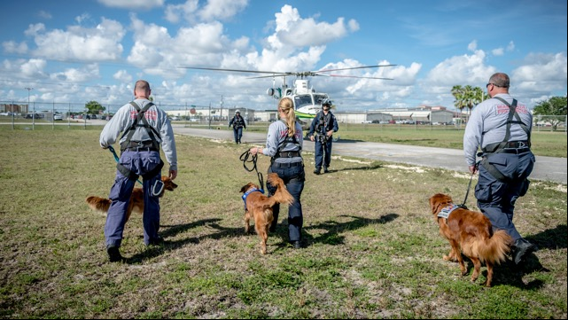 Search and rescue dogs do their jobs despite travel stress