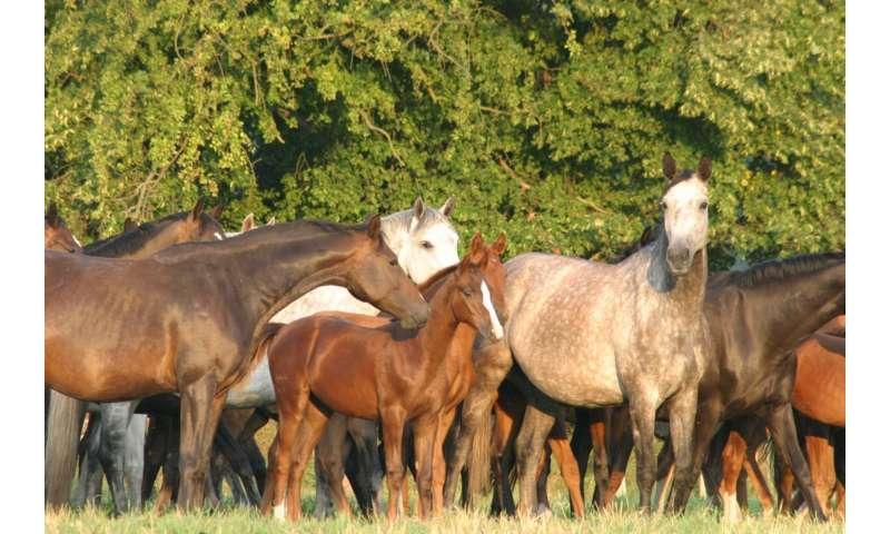 Seasonal effects: 'Winter foals' are smaller than foals born in summer