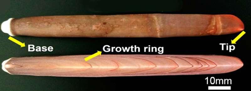 Sea urchin spines could fix bones