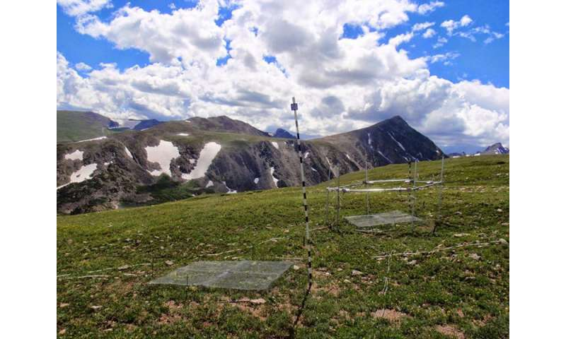 Seedlings face uphill battle with climate change